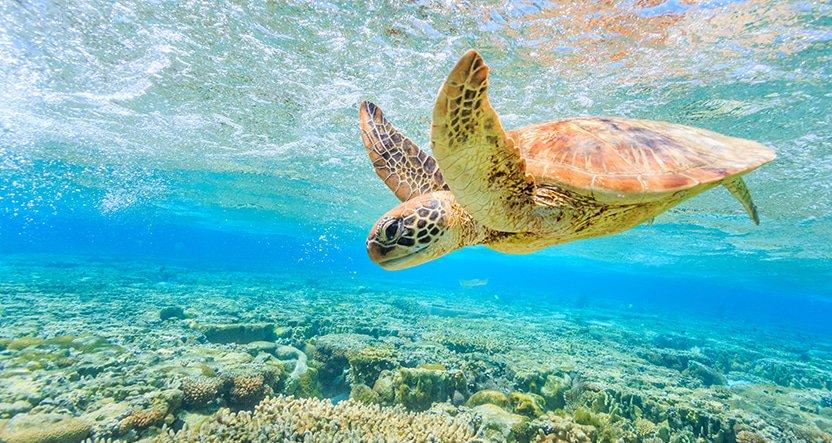 12 BEAUTIFUL ISLANDS TO EXPLORE IN NQ